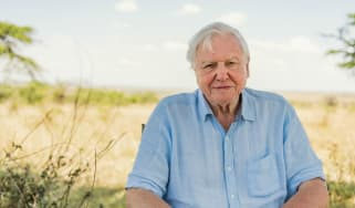David Attenborough's new show, A Life on Our Planet, is streaming on Netflix