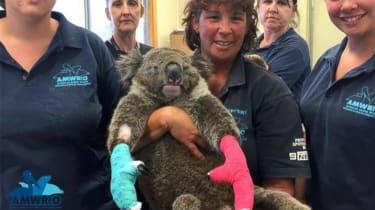 koala_gloves.jpg