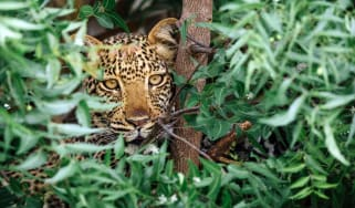 Leopard in Katavi National Park, Tanzania