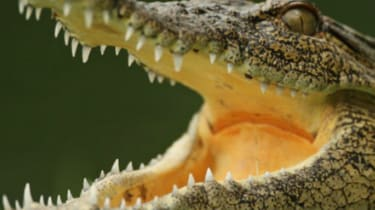 141121-crocodile_0-wd.jpg