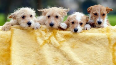 wd-puppy_-_scott_barbourgetty_images.jpg