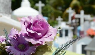 blossom-plant-flower-petal-religion-memory-858887-pxhere.jpg