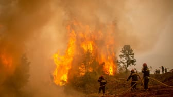 Firefighters battle wildfires in Greece