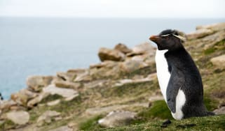 171030-birdwatching-top.jpg