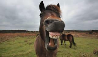 151026-horses.jpg