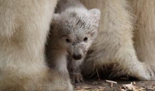1_polar_bear.jpg