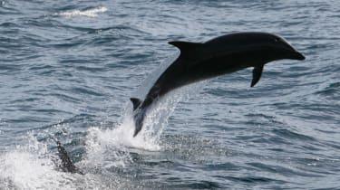 dolphin-300113.jpg