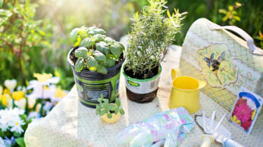 Gardening tips and advice