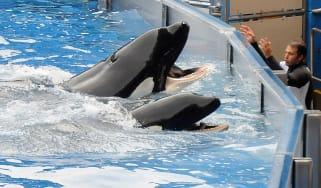 Killer whale seaworld