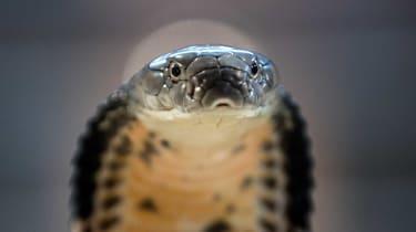 121218-wd-snake.jpg