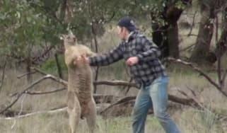 161205_man_v_kangaroo.jpg