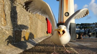 A seagull landing on the pavement