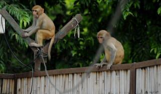 160121-monkey.jpg