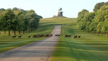 Deer cross the Long Walk at Windsor