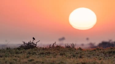 Dawn on the Makgadikgadi salt pans, Botswana