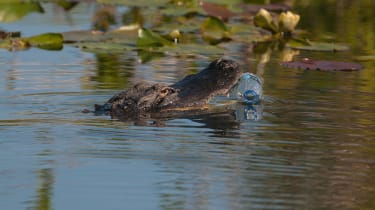 1-2-alligator-eating-plastic-credit-david-tipling-alamy-expire-21mar2022-alamy-c8xfb2.jpg