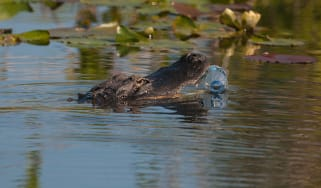1-2-alligator-eating-plastic-credit-david-tipling-alamy-expire-21mar2022-alamy-c8xfb2.jpg