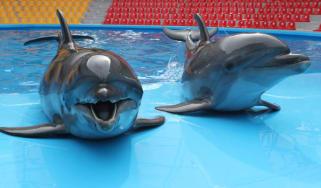 Dolphins in Ukraine