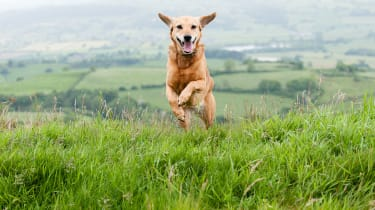 Dog running © iStockphotos