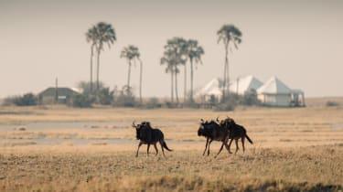 San Camp, Kalahari