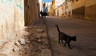 moroccocat.jpg