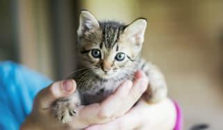 Petfishing, cat, kitten