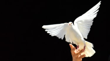 wd-peace_dove_2_-_alberto_pizzoli_afp_via_getty_images.jpg