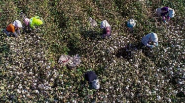 Workers pick cotton in a field in China's northwestern Xinjiang region