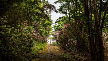 Glenapp Castle forest