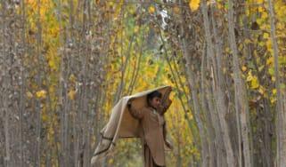 Afghan trees