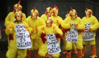 160121-chickens.jpg