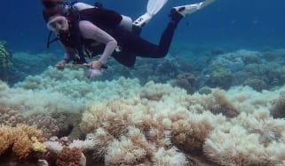 100417-wd-coral-bleaching.jpg