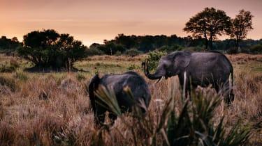 Okavango Delta elephants at dusk