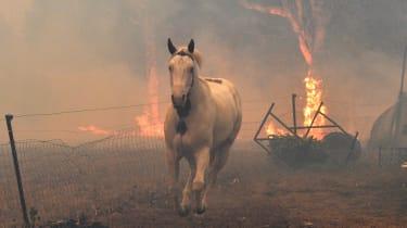 australia_bushfire-1191120340_cropped.jpg