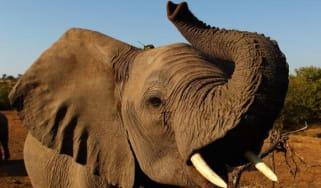 150313-elephant.jpg