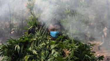 Mexican soldiers destroy a marijuana plantation near La Rumorosa town in Tecate.