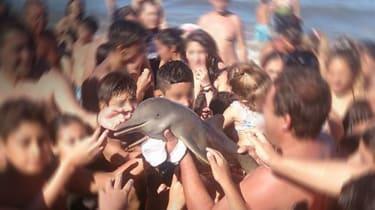 160219-dolphin.jpg