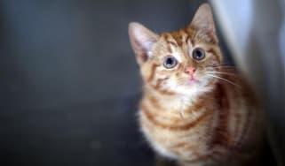141126-kitten.jpg