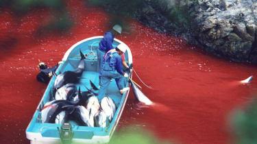 dolphin-killing.jpg