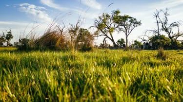 Okavango Delta grassland