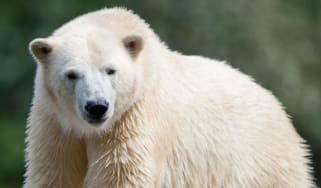 The fossilised remains of a polar bear have been found in the Indian Himalayas