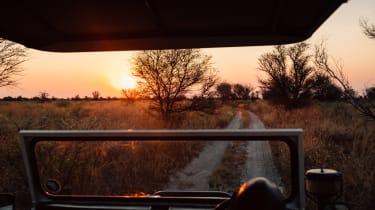 Feline Fields, Botswana