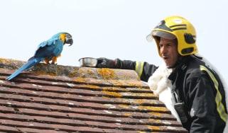 Parrot roof Fire brigade