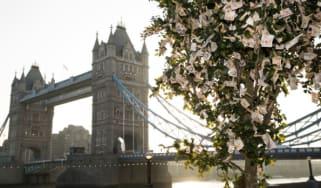 Money growing on trees by Tower Bridge, London