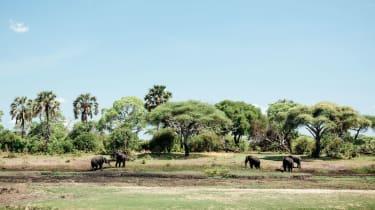 Elephants in Katavi National Park, Tanzania