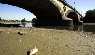 A dead fish by the Thames