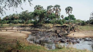 Hippos in Katavi National Park, Tanzania