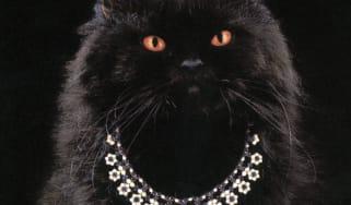 boucheron_cat_theweek_portfolio_teaser4.jpg