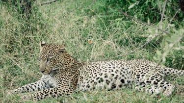Azura Selous, Tanzania