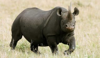 An angry rhinoceros has attacked a car in a Mexican safari park